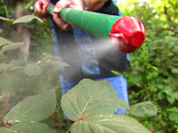 fungicide for plants